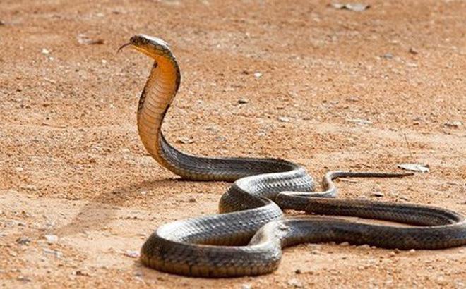 Mơ thấy rắn vào nhà