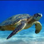 Mơ thấy con rùa là điềm báo gì? Thông điệp từ con rùa