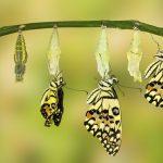 Giải mã giấc mơ thấy con sâu bướm mang đến thông điệp gì?